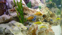 Dekoration im Aquarium Becken 392