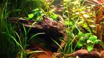 Dekoration im Aquarium Becken 4402