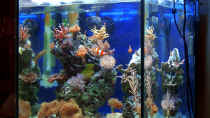 Dekoration im Aquarium Becken 4934