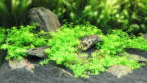 Dekoration im Aquarium Becken 5723