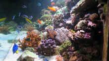 Aquarium Wohnzimmerriff