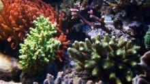 Pflanzen im Aquarium Wohnzimmerriff