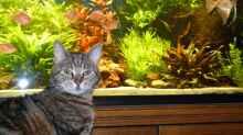 Katze Odie hat alles im Blick