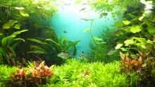 Aquarium Guppytraum (Nur noch als Beispiel)