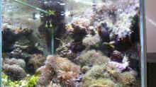 Aquarium MW Würfel WZ