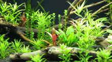 Aquarium Somewhere....(Nicht mehr aktuell)