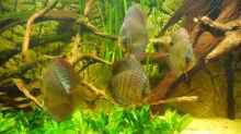 Besatz im Aquarium Lago Pampo