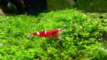 Besatz im Aquarium Becken 31169