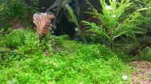 Aquarium Becken 31169