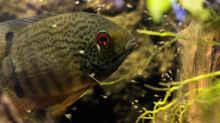 Besatz im Aquarium Back to the roots