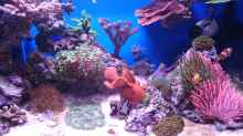 Aquarium 140 Liter Meerwasseraquarium