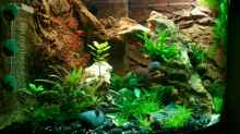 "Aquarium Trigon 190 ""Buddha"""