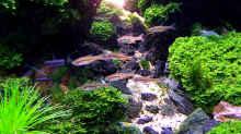 Aquarium Straight Edge
