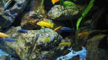 Aquarium Becken 32316