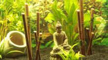 Bambus mit einem Buddha