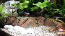 Aquarium Juwel Vision 450 Gesellschaftsbecken