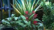 Pflanzen & Deko 03