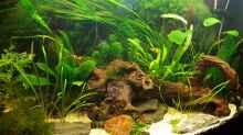 Aquarium Juwel Vision 180 Southamerica Fever
