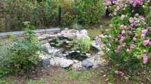 Mal was anderes: Mein kleiner gemütlicher Gartenteich