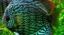 Besatz im Aquarium On The Riverbank
