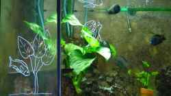 Mein erstes Aquarium in Mo