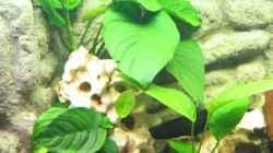 Pflanzen im Aquarium Becken 1021