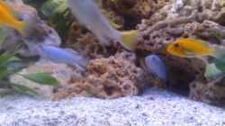 Besatz im Aquarium Becken 10223