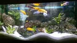 Aquarium Becken 10223