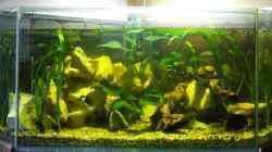 Aquarium Becken 10275