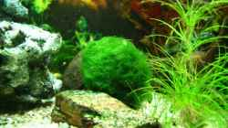 Dekoration im Aquarium Becken 10384