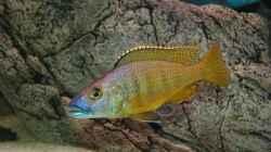 Besatz im Aquarium Becken 10590