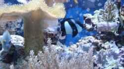 Besatz im Aquarium Becken 10686