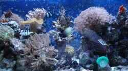 Aquarium Becken 10686