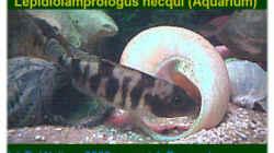Besatz im Aquarium Becken 108