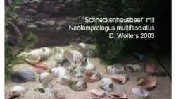 Dekoration im Aquarium Becken 108