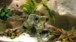 Pflanzen im Aquarium Becken 10874