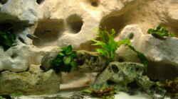 Dekoration im Aquarium Becken 10874