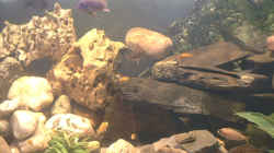Aquarium Becken 109