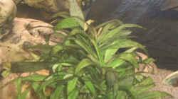 Pflanzen im Aquarium Becken 109
