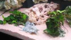 Pflanzen im Aquarium Becken 11000