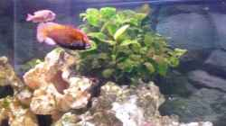 Besatz im Aquarium Becken 11000