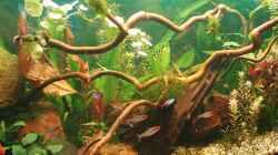 Dekoration im Aquarium Becken 11189