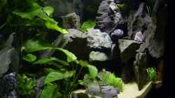 Dekoration im Aquarium Becken 112