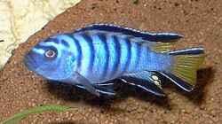 Besatz im Aquarium Becken 113