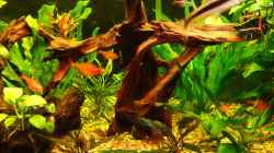 Dekoration im Aquarium Becken 11316