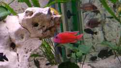 Besatz im Aquarium Becken 11327