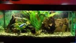 Aquarium Becken 11378