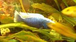 Besatz im Aquarium Becken 11378