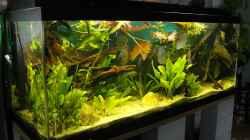 Aquarium Amazonas (Existiert nicht mehr)