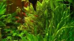 Aquarium Deep Blue